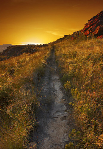 Golden Trail {{EXPLORED}} | by rhyspope