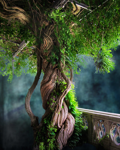 Father Tree - from Biltmore | by Michael Taggart Photography