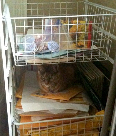 Gelli guards the shipping cart | by BERKSHIRE Publishing Group