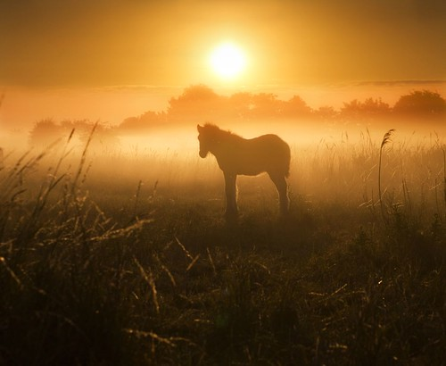 Little Foal | by adrians_art