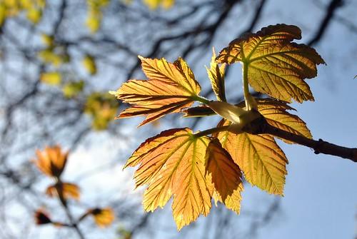 leaves 'n sun