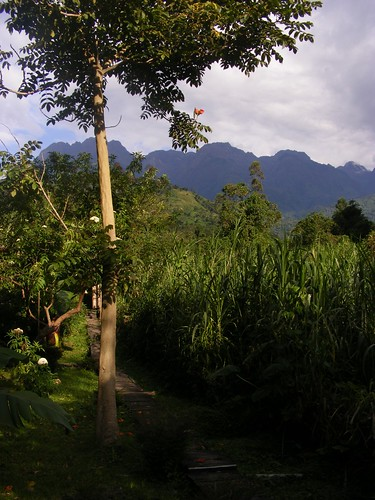 View of the Rwenzori Mountains | by CharlieBeau