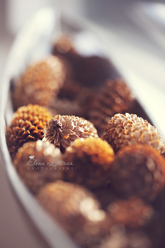 pine cones in bowl | by Elena (Litsova) Sigtryggsson