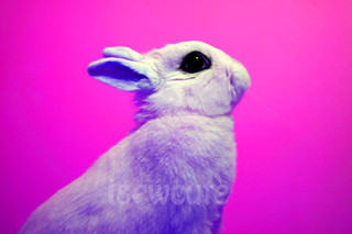 bunny pop art in pink and purple by isewcute | by isewcute