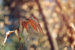 Survivor leaves  ~hbw~! | by Mary Vican