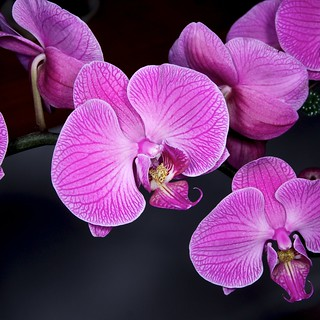 Orchids | by herb.g