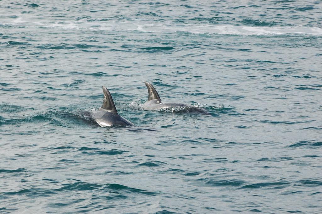 2009 Jan NZ Dolphins 014