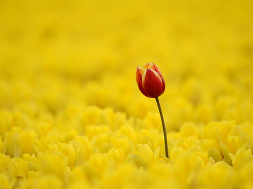Standing out from the crowd | by Jan van der Wolf