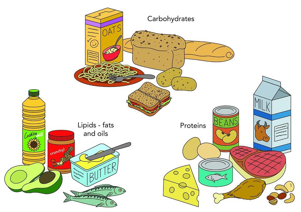 Food Groups Illustration Used In Gr 4 6 Natural Sciences A Flickr