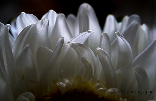 Awakening  Petals | by zoom out till -- more off than on