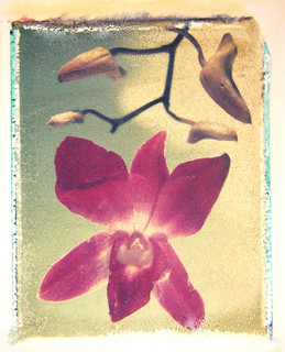Orchid: Polaroid transfer by John Fobes | by john_fobes