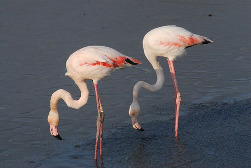 flamingo winter | by wilf