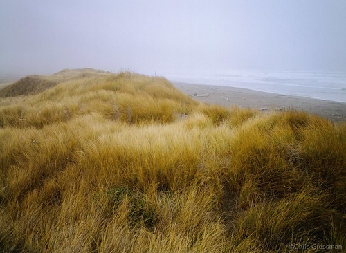A Foggy Day on Manchester Beach - GA645ZI - Provia 400X | by divewizard