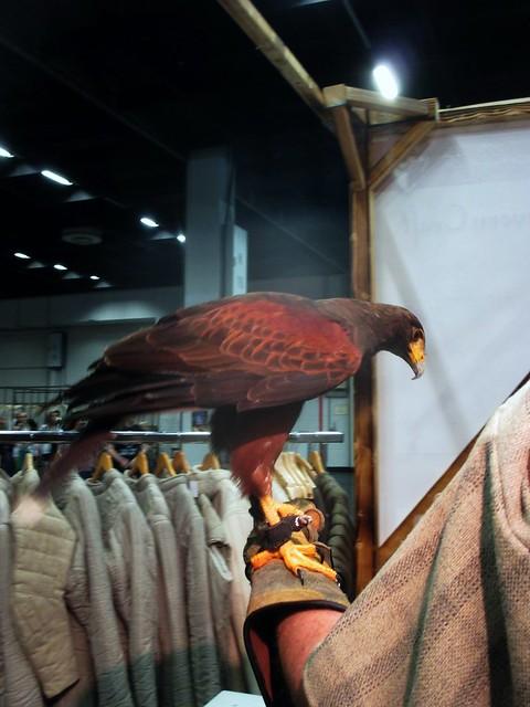 falconry @ RPC Cologne