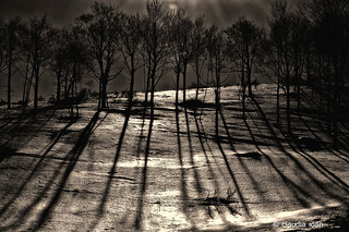 """OMBRE D'ALBERI"" / ""SHADOWS OF TREES"" 