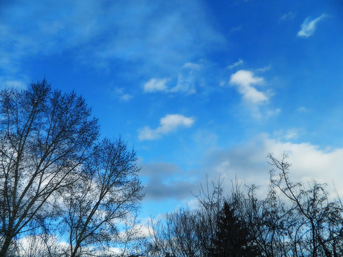 Trees, Sky, Clouds | by LostMyHeadache: Absolutely Free *