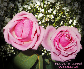 Due rose per augurare un buon fine settimana - Two roses to wish a good weekend | by Buonaventura's & Carla's