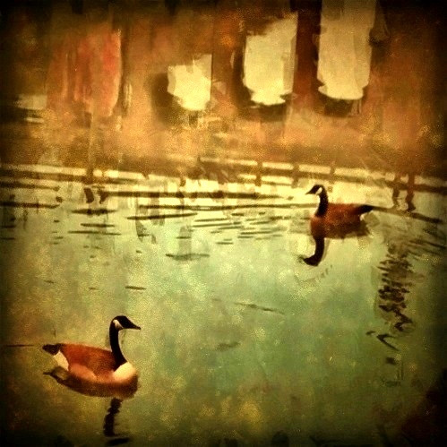 Ducks and a bridge reflection | by Jack Mallon