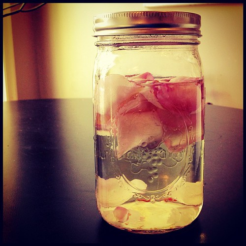 homemade rosewater from my smelliest pretties | by blakekahan