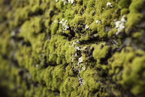 Mossy Log blog | by binah06