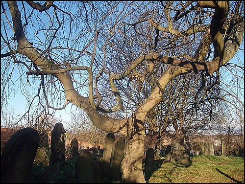 """ Churchyard Tree "" 