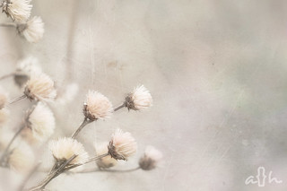Neutral Nature | by Andrea Hurley Photography