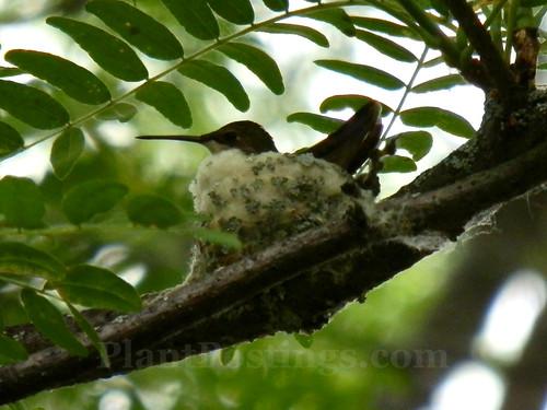 hummer nest 2
