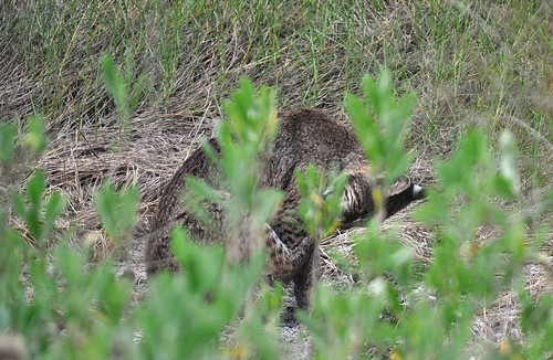 hmmm what is lurking in the tall grass? | by Sarita Linda