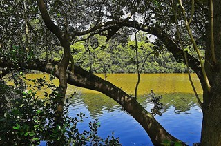 Mangroves by the River | by Dovid100