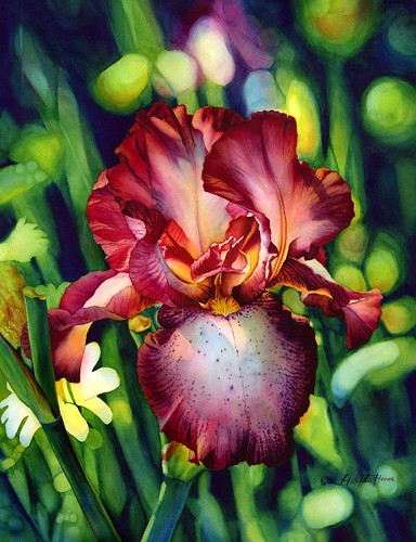 Sunlit Iris | by Hailey E Herrera Art Journey