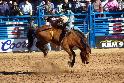 Tucson rodeo bucking bronco | by kanu101