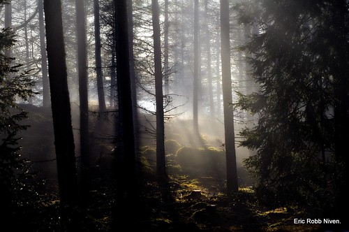 Atholl Woods Softly Misty. | by eric robb niven