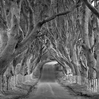 Dark Hedges 2 mono | by frcrossnacreevy