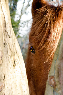 New Forest Ponies | by Simon Cresdee [www.simoncresdeephotography.com]