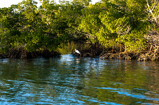 everglades_062 | by alans1948