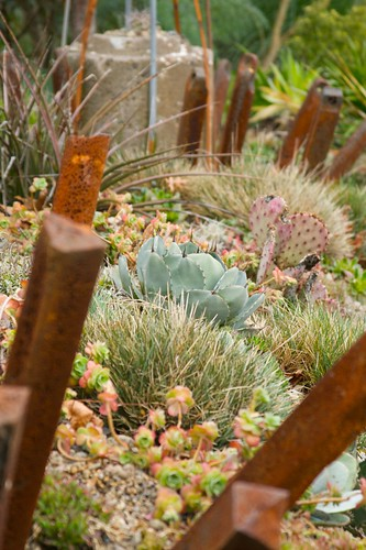 agave vignette vertical  1470 | by Scott Weber PDX