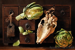 Artichokes, Coyote Skull, Fishing Weight | by Allison Achauer