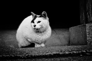 Today's Cat@2012-02-09 | by masatsu