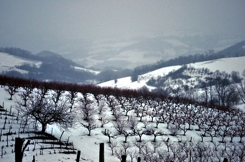 Neve in collina | by annibale barone