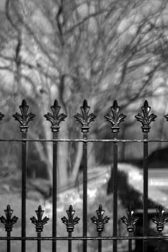 Fenced | by edrodzen