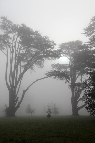 Ickworth Park (NT) 02-03-2012 | by Karen Roe