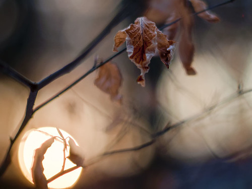 Leaf in the Dusk | by Terapixel²