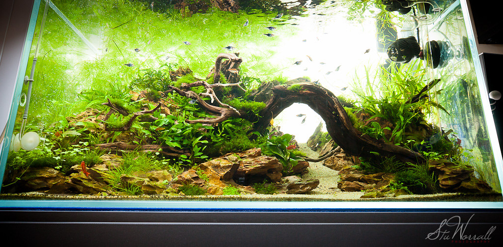 Incroyable ... 90x45x45 Planted Dragon Stone Aquascape | By Stu Worrall Photography