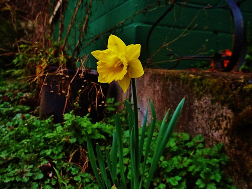 Day Ten: The First Flower Of Spring | by Cakes Photo