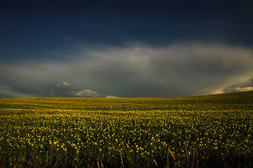 cloud & rapeseed | by Hawkonefive