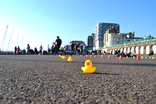 Duck Skaters | by Brightollie