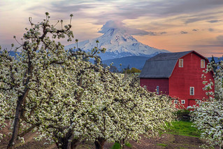 Red Barn in Pear Orchard in Hood River Oregon at Sunset - HDR | by David Gn Photography