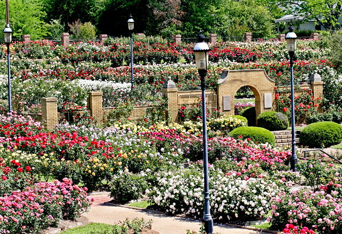 overall garden 2 | by City of Tyler, Texas