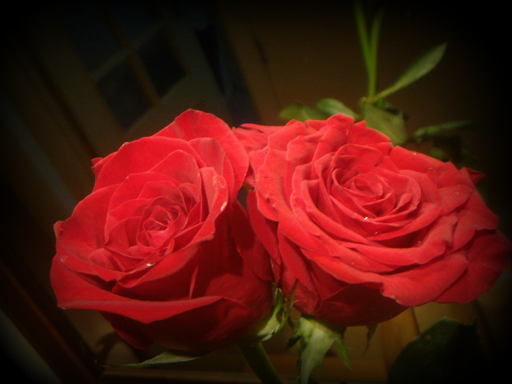 Afbeeldingsresultaat voor two roses