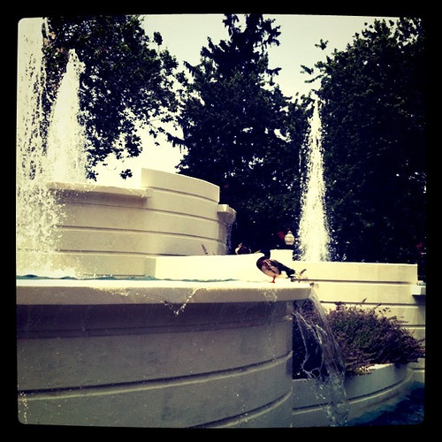 Duck fountain 3 | by JenMcMillin17